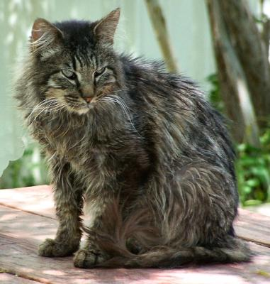 Sugar is a touchable feral cat -- by Purrs & Paws of A.R.A.S. - Michael added the picture & this feral cat is not related to the story.