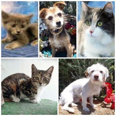 puppymills vs shelters essay The problem of puppy mills, over-population and not enough homes for dogs and  cats is a worldwide issue, despite the best efforts of animal.