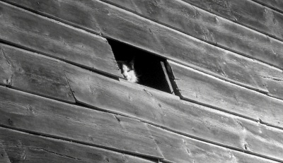 Barn Cat at Window - Photo by Bee Skutch