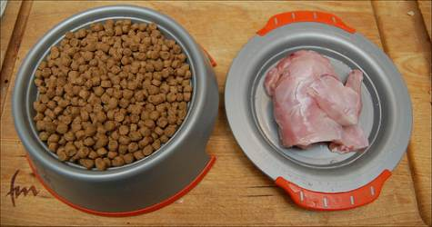 Raw cat food and kibble cat food