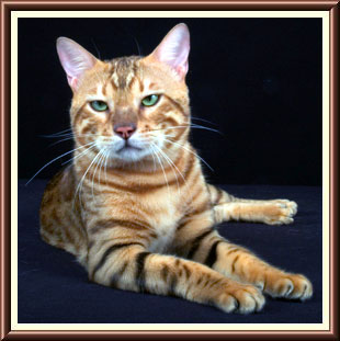 RW SGC Savannah River Golden Nugget - Photo copyright Savannah River Bengals