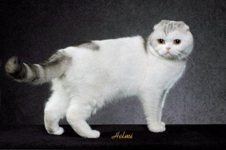 Kucing Termahal Di Dunia Foretime