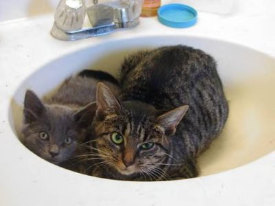 Stray cats in a sink