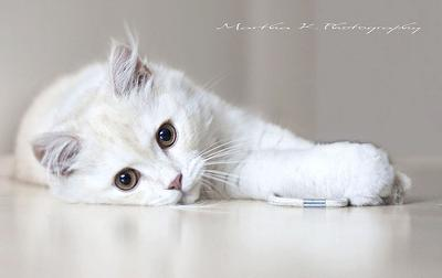 I love cats because I love my home and after a while they become its visible soul - Jean Cocteau - Photo by Martha★