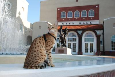MAGIC - The Savannah Cat Shoppe Now Open 800-881-0006