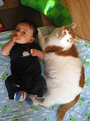 Did the child's presence have a detrimental effect on the cat? Read on..Photo by Beth Nazario (Flickr)