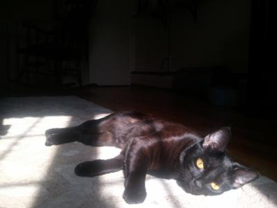 Tulip Lying in the Sun After Morning Cat-Bath