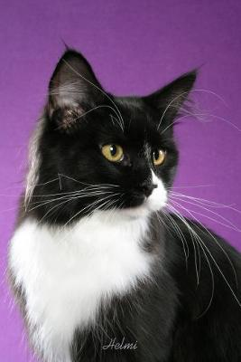 Black and White Cat of no breed -- photo copyright Helmi Flick