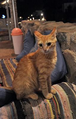 A cat at a restaurant in Dahab, Egypt -- Photo by nebedaay (Flickr)
