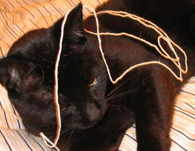 Cat and string - potential danger - Photo by John Leach