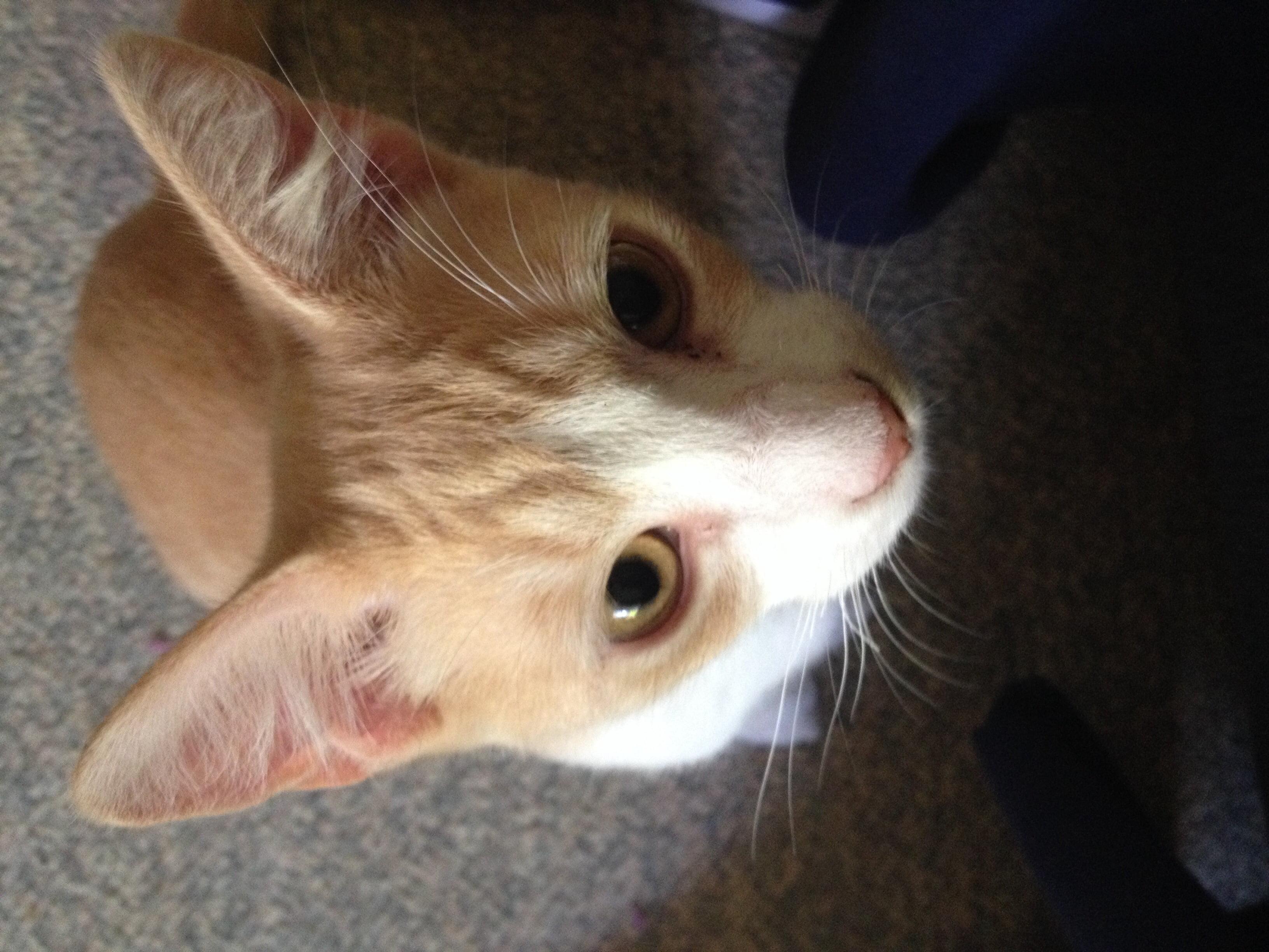 Cat Eye Color Poc