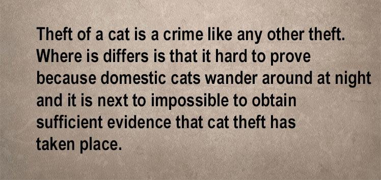 Cat theft