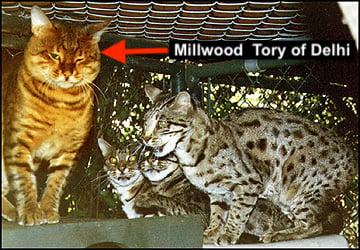 Millwood Tory of Delhi