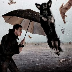 'Raining cats and dogs' - origin of the saying