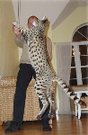 World's biggest cat
