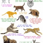 Amazing cat facts