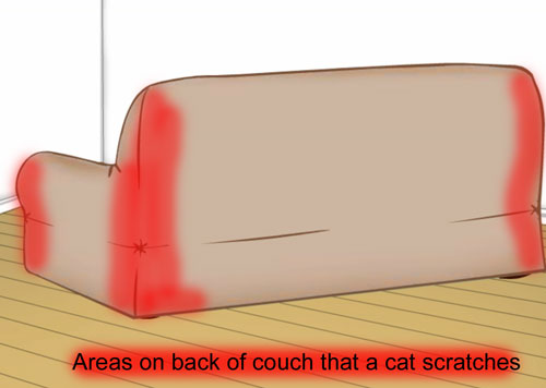 Cat scratch sofa - back