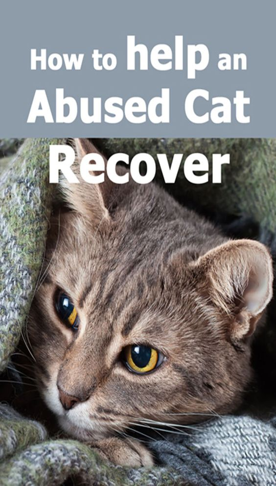 How to help an abused cat recover