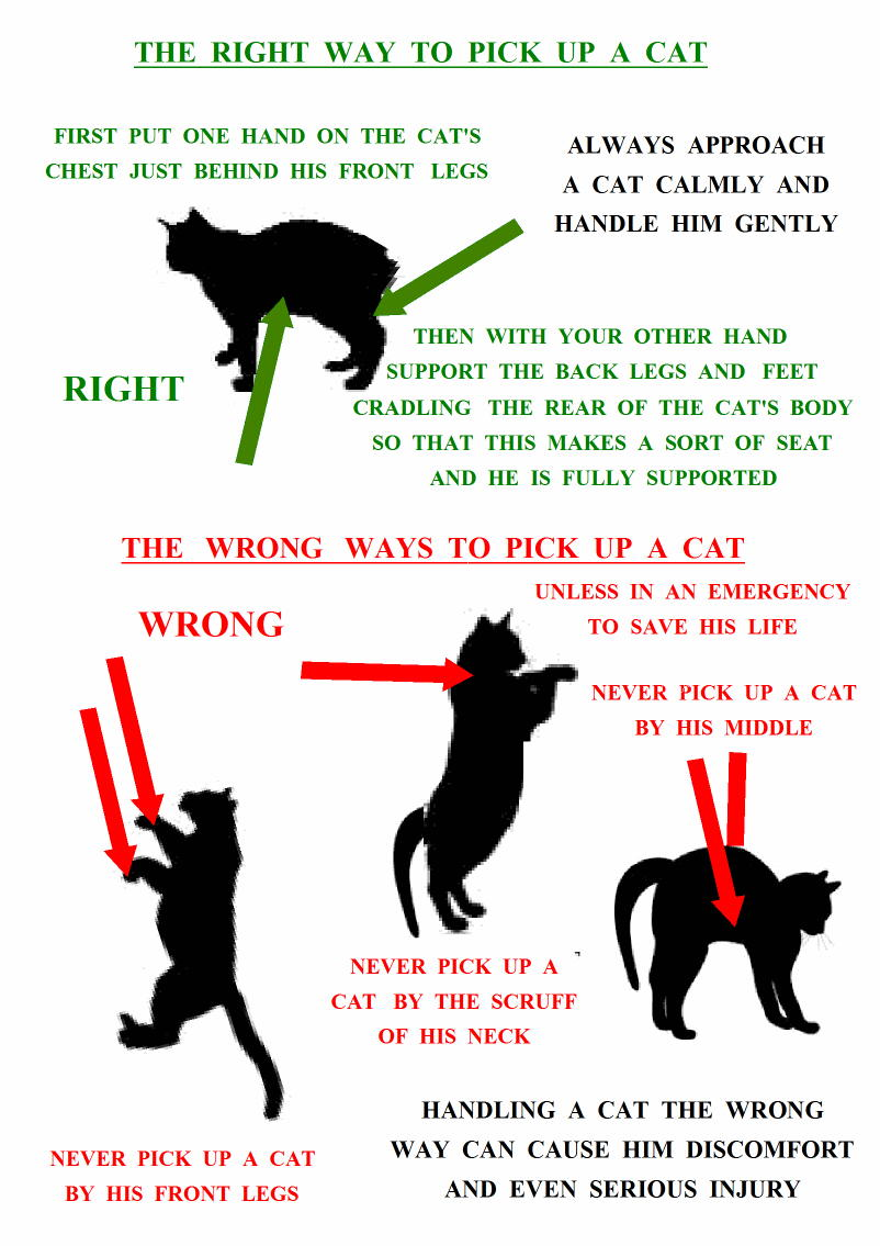 How to pick up a cat