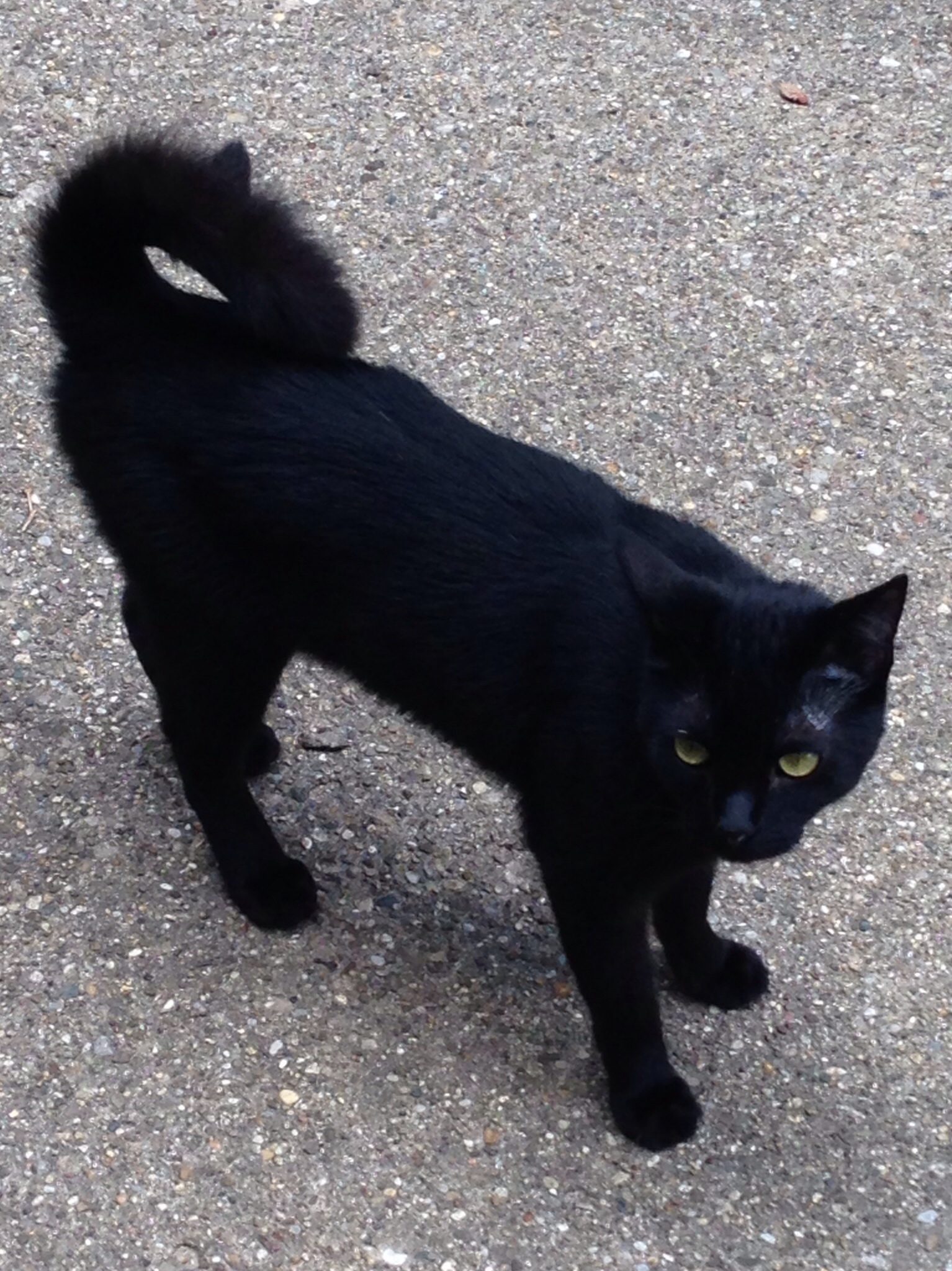 Black Cat Street