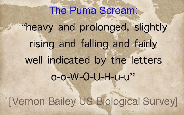Puma scream described in words