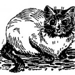Traditional Siamese Cat Drawing by Louis Wain