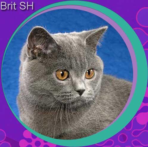 British SH