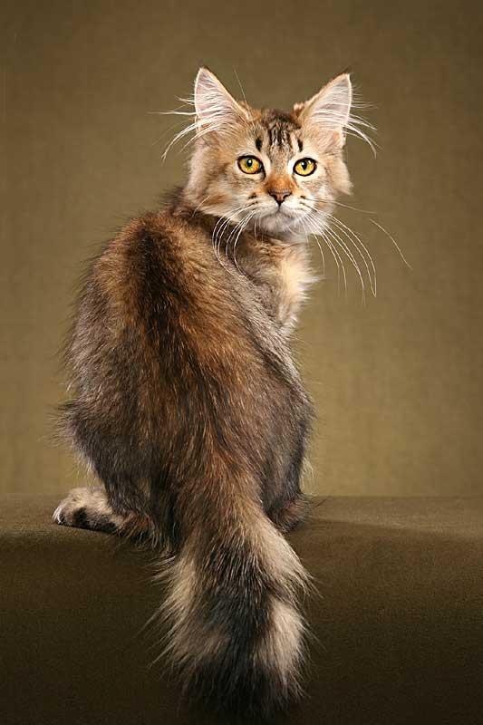 Cat Hair Pigmentation Types Poc