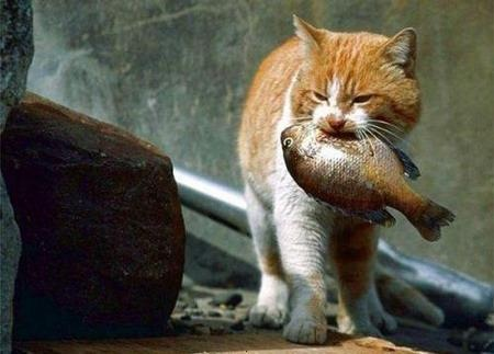 Feral cat with a fish in mouth