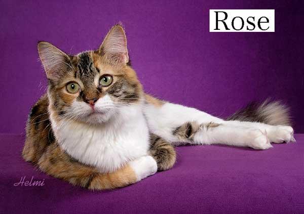 \Rose a moggie cat