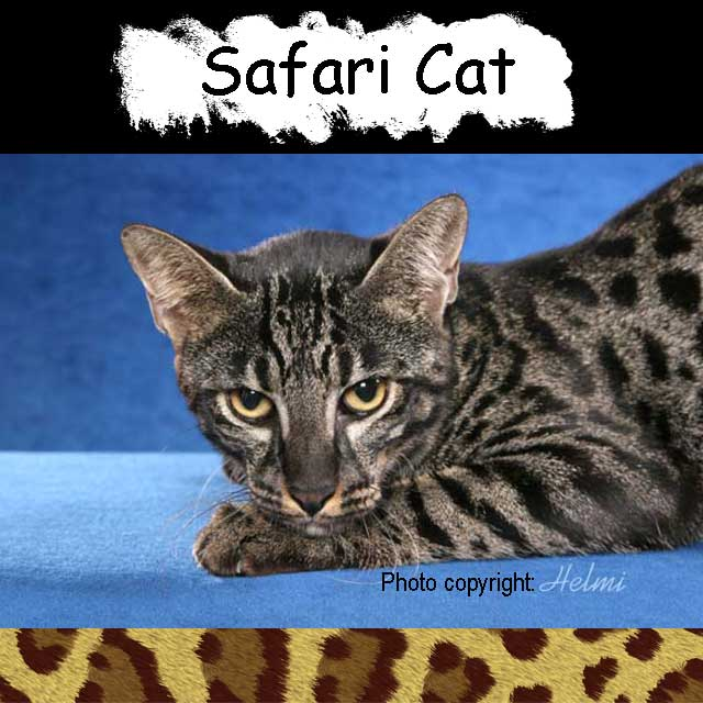 Safari Cat