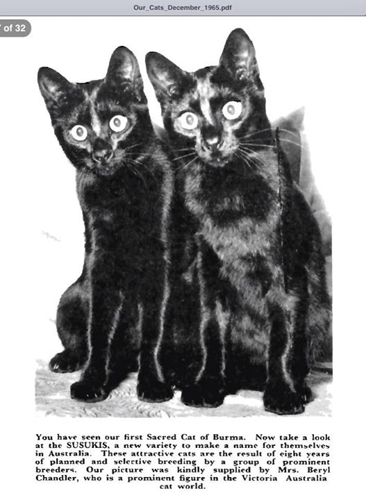 Susuki from Our Cats Dec 1965