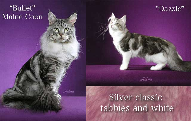 Tabby and white cats