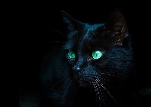 black cat against black background