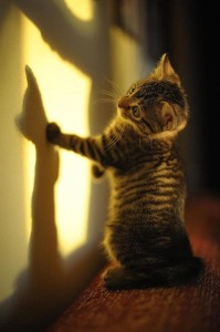 Kitten catching the light and his shadow