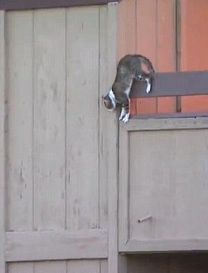 cat jumps from burning building