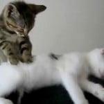 Cat Massage!