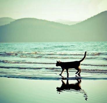 Cat on Beach. Natural. Beautiful.