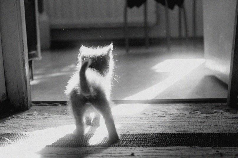 Kitten walking into the light