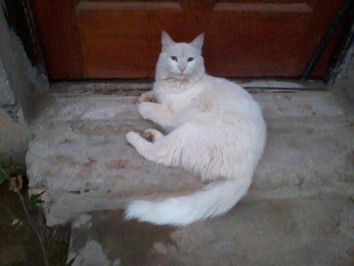Glamorous Cat