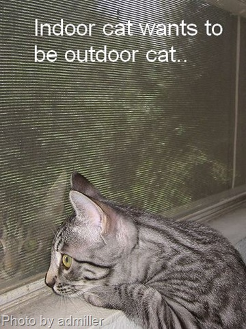 Some indoor outdoor cat facts for Having an indoor cat
