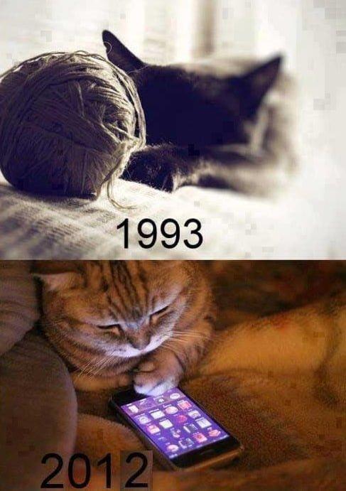 Modern Cat