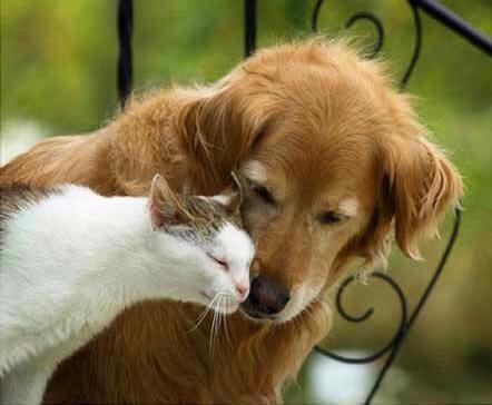 Old Friends - Cat Loves Dog