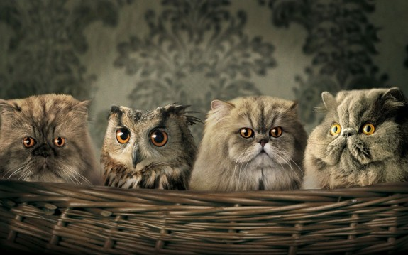 Persian cats and owl
