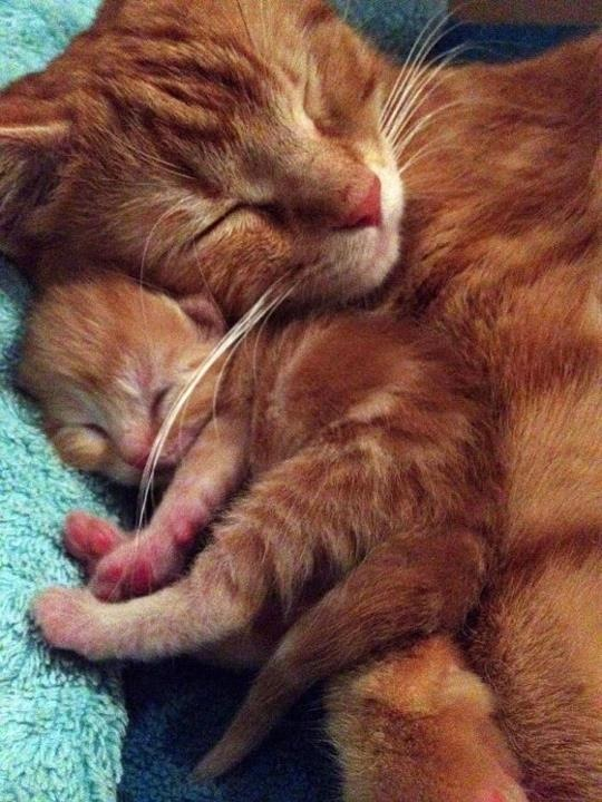 Tender mother cat love towards offspring