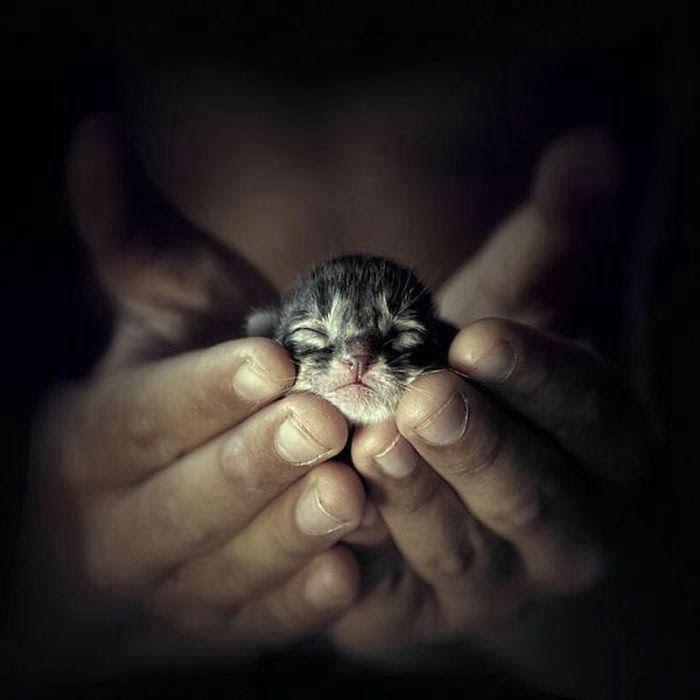 Precious Kitten Vulnerable Cat