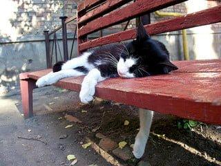 stray cat Ukraine