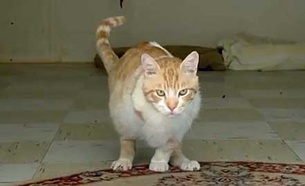 abused three legged cat