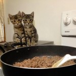Two Hungry Kittens Waiting For Dinner