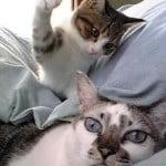 Whap. Wham. Bam. Kittens hits cat.